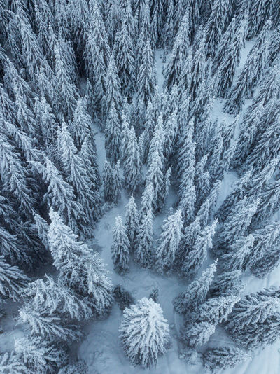 Winter Snow Cold Temperature Pine Tree Full Frame Tree Coniferous Tree No People Nature Plant Forest Frozen Backgrounds WoodLand Tranquility Pine Woodland Scenics - Nature Beauty In Nature Day Evergreen Tree Fir Tree Snowing Frozen Aerial View Tree