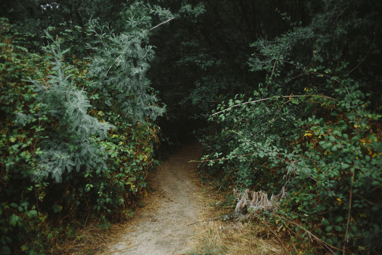 Enter the void Dark Empty Empty Road Footpath Forest Green Color Growth Lush Foliage Moody Narrow Nature No People Non-urban Scene Outdoors Plant Remote Scenics Silence Silence Of Nature Solitude The Way Forward Tree VOID VSCO WoodLand
