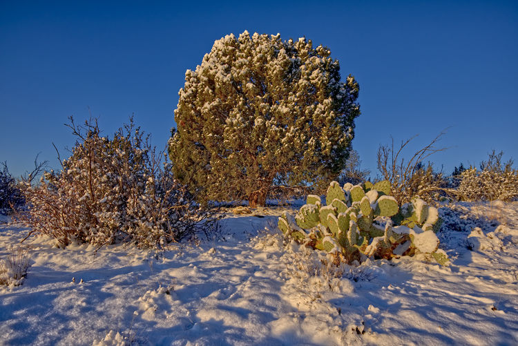 Plants on field against clear blue sky during winter