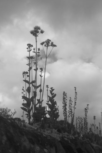 Close-up of plants against sky