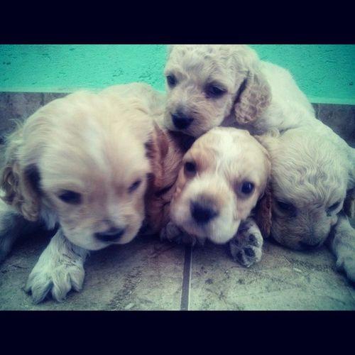 Ellos quieren ser adoptados... si estas interrsad@ manda inbox Perritos Pet Adoptame LoveMe cute dog puppy