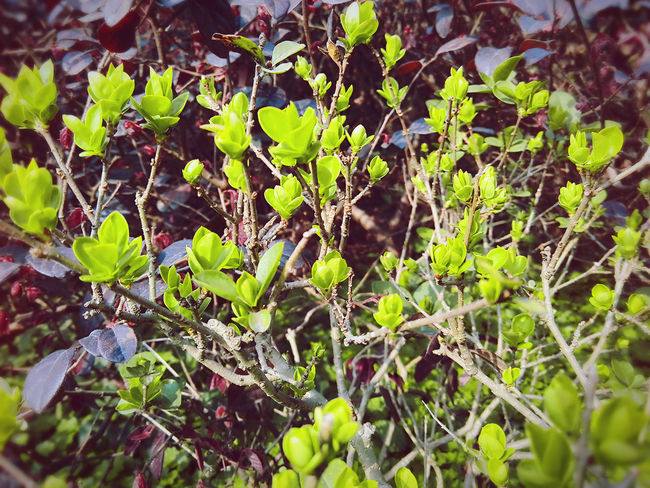 Leaf Growth Nature Plant Green Color Freshness Outdoors Close-up No People Fruit Day Beauty In Nature Tree Food