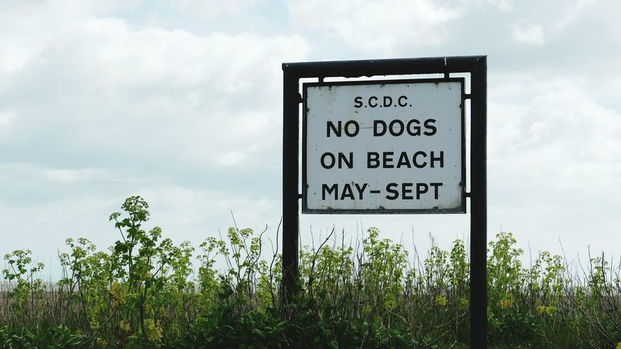 ' No Dogs Allowed ' No Dogs Beach Sign Restrictions No Dogs On Beach Sign Aldeburgh Aldeburgh Beach -- B
