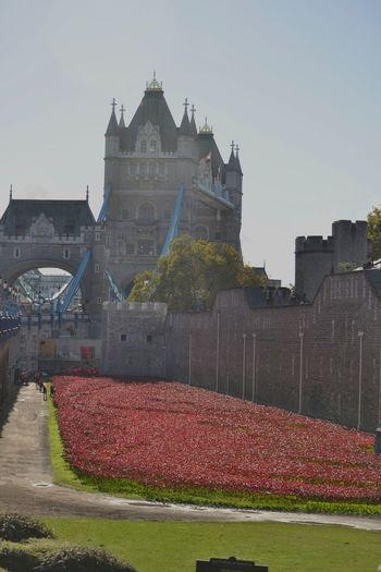 Tower Of London Poppies  Lestweforget