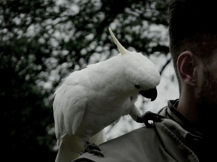 Kakadu Bird