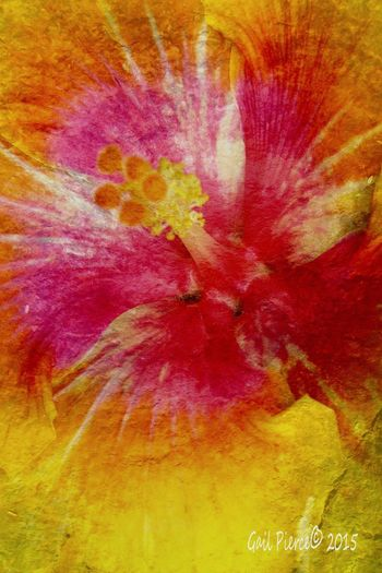 Morning greeting! Hibiscus Flower Garden, Flowers, Nature And Beauty Photo Art Blended Images, Flower Art Joy, Digital Expression,