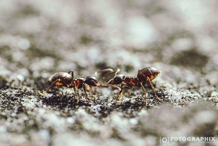 Ameisen in einer Besprechung Ameisen Ants