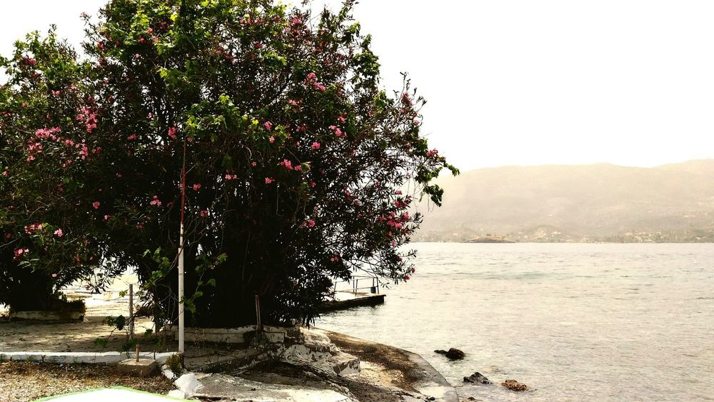 Sea and blossom Sea May Blossom Nature Beach Relax Greece Island Poros