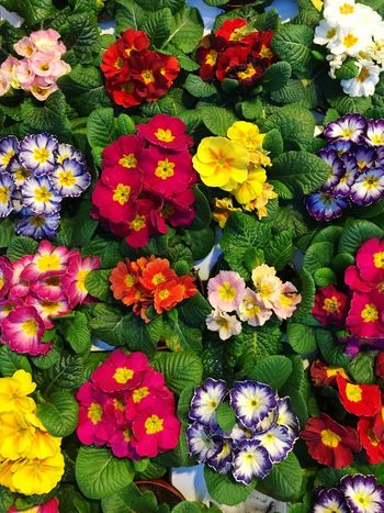 Flowers Flower Pattern Pieces Pattern, Texture, Shape And Form Pattern Spring Supermarket Fresh Colorful Energy Happiness Say It Without Words Choice