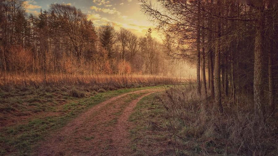 December afternoon sunset inside True Skov, near Aarhus, Denmark. Showcase: December Afternoon True Skov Forest In The Forest Forest Path Sunset Aarhus Aarhus, Denmark Denmark