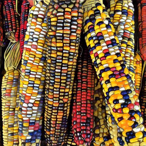 multi colored
