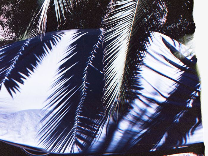 Summer shadows No People Tree Day Nature Plant Close-up My Best Travel Photo Low Angle View Pattern Palm Tree Feather  Palm Leaf Outdoors Sunlight Growth Beauty In Nature Tropical Climate Still Life