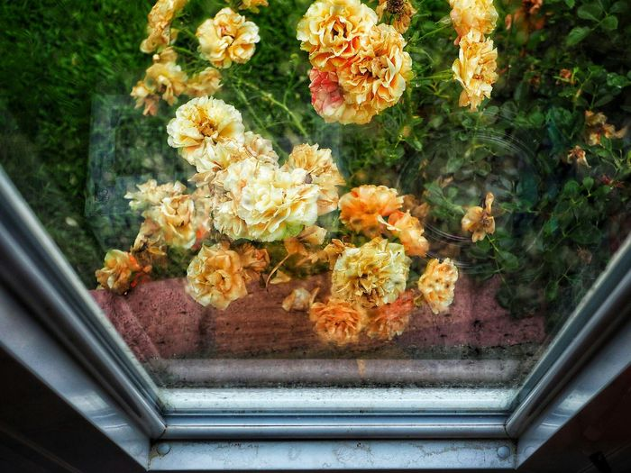 High angle view of flowering plants in glass window