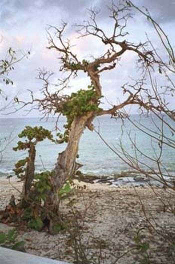 Close-up of tree on beach against sky