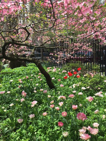 Spring in NY Tadaa Community New York Flowers, Nature And Beauty Urban Spring Fever Spring Flowers Gramercy