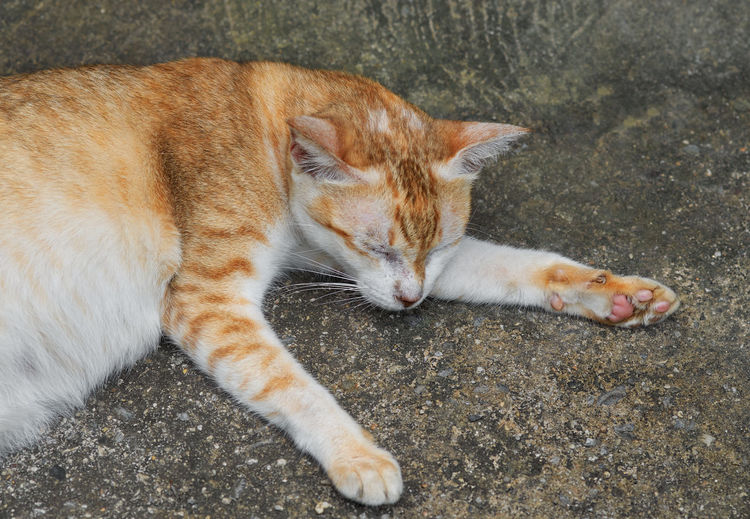 High angle view of cat lying on footpath