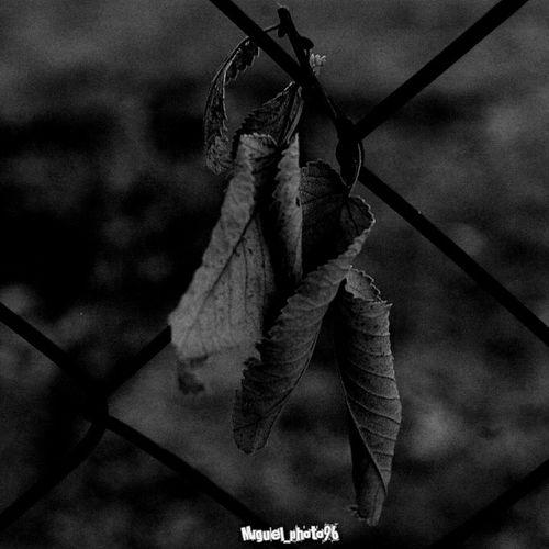 Buenos Dias Mundo! Taking Photos Blancoynegro Black&white Leaves Hojas Konoha Hello World Tagsforlikes Lovingphotos