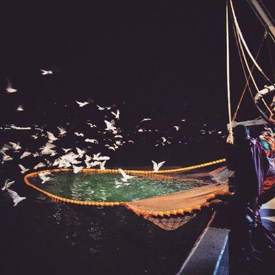 Fish Fishporn Instafish Swim water coral reeftank tropical photooftheday saltwater freshwater beautiful ocean ship bird fishingboats documentary fisherman balıkçı izmit kocaeli nadirozkan f69 fishingrod martı nadirozkanbalikci
