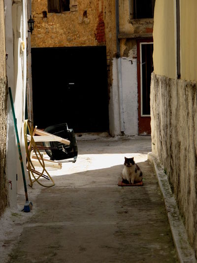 City Travel Animal Cat Chios Greece Island Medieval Streetphotography Tourism Village