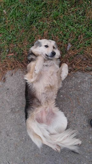 High angle view of dog resting on field
