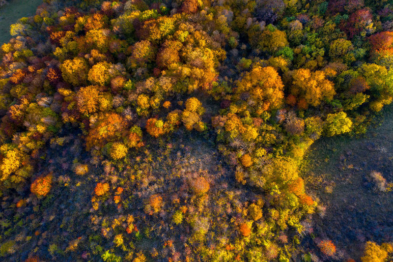 Aerial view of trees and plants on landscape during autumn
