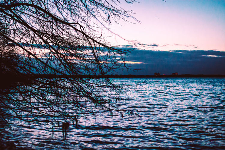 Tree Water Branch Bare Tree Plant Tranquility Beauty In Nature Sky Nature Tranquil Scene Scenics - Nature Outdoors Cloud - Sky Waterfront Lake No People Sunset Reflection Rippled Bluehour Shore Edge