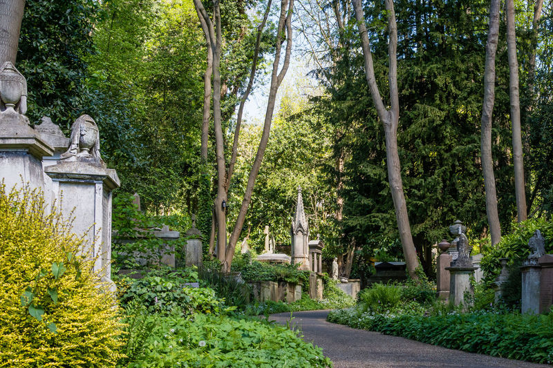 Built Structure Architecture Day No People Outdoors Nature Highgate Cemetery Highgate Graveyard Gravestone Headstone Cemetery Path Stone Plant Tree Green Color Footpath Tranquility Beauty In Nature Road Tranquil Scene Growth Formal Garden Lush Foliage Foliage Garden Forest Ornamental Garden WoodLand Flowerbed