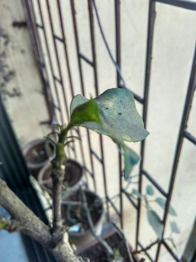 Image taken by phone 💜💜💜💜💜 Xiaomiredmi2camera