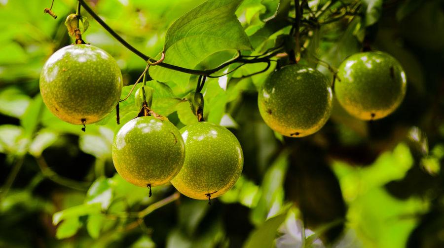 Fruityy....