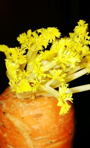 Yellow Leaf💛 Carrot Orange Yellow Stunning_shots Kitchen