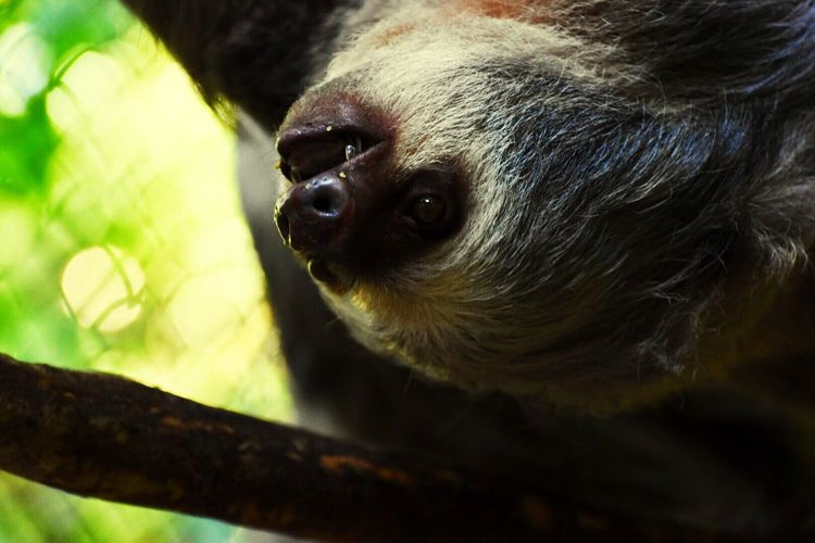 Close-up of sloth on tree