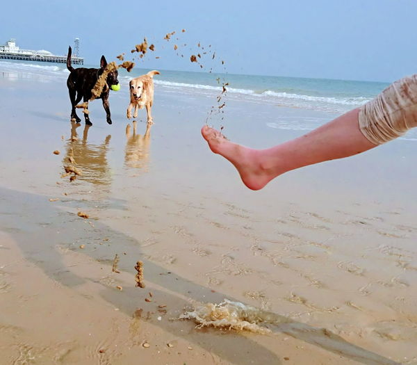 Taking Photos Hello World Enjoying Life Water Dog Dogslife Check This Out Dog Love Dogs Of EyeEm DogLove Doglovers Dogsareawesome Dogs_of_instagram Gundog Labrador Retriever Outdoors Last Days Together Beach Dog Beachphotography Love ♥ My Daughter ♥ Photography In Motion Things I Like