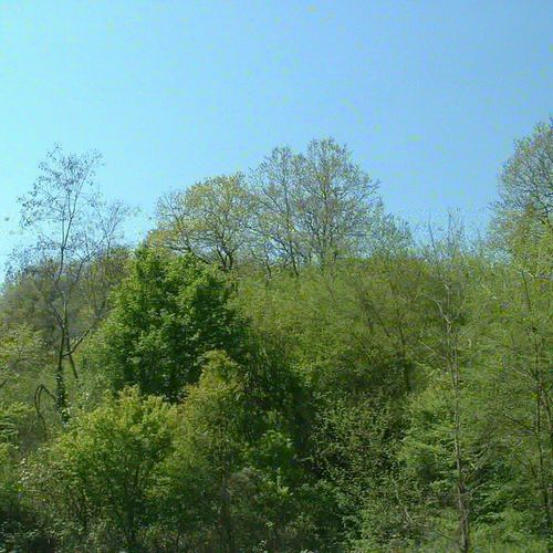 Зеленика Tree Sky Grass Green Color