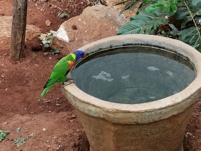 parrot South India Day Day Photography Funtimes Honor8xphotography Mobilephotography Honor Mobile Photography Honor8X Beauty High Angle View Close-up Drinking Fountain Pot
