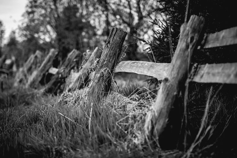 Plant Tree Day Land No People Nature Selective Focus Wood - Material Field Outdoors Close-up Grass Focus On Foreground Wood Growth Tranquility Old Forest Boundary Fence