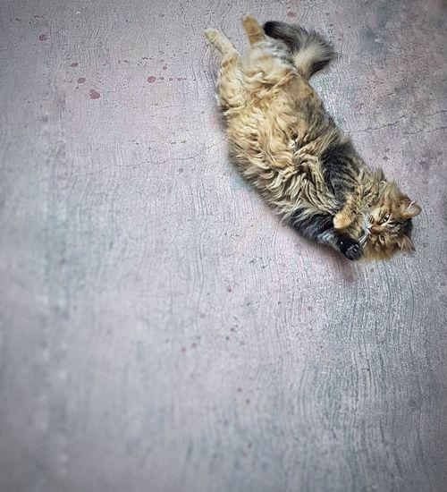 cat Sweet Cat