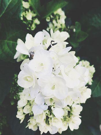 White Flower Flowering Plant Plant Vulnerability  Fragility Flower Head Beauty In Nature