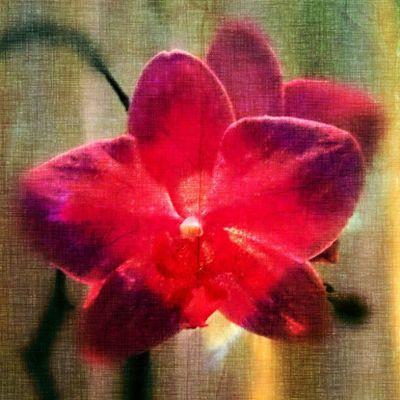 Orkidé DroidEdit Droidedit_colortheme Flower