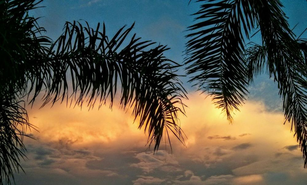 Sunset Nature Palm Trees Inspired By Beauty I Love Sunsets Florida Florida Sunset Floridaliving  Life Is Beautiful