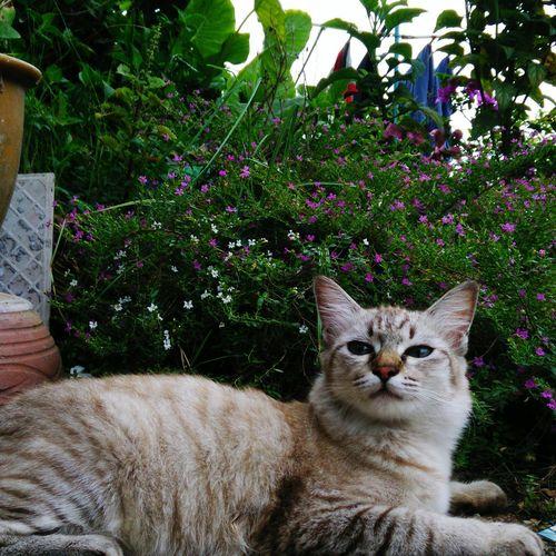 Gemok is awesome Mycat♥