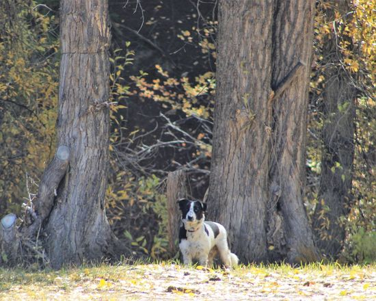 Mammal One Animal Animal Themes Animal Domestic Animals Tree Domestic Pets Dog Canine Forest Plant Tree Trunk Trunk Vertebrate Land No People Day Portrait Nature WoodLand Purebred Dog