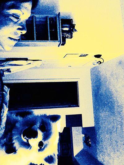 Minimal Dog Abstract Yellow