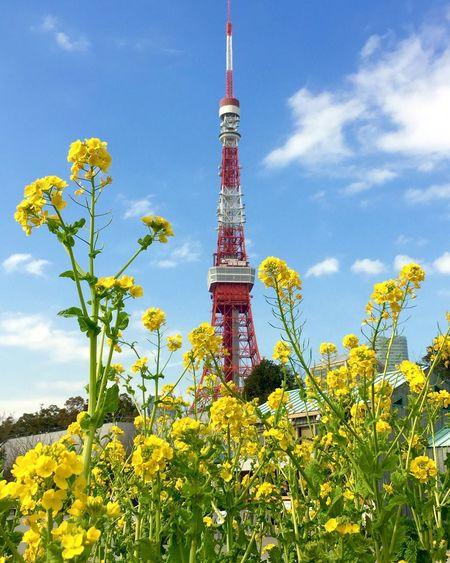 Bluesky Tokyotower Fieldmustard(null) Fineday Soonspring