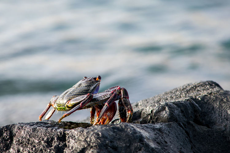 Close-up of crab on rock