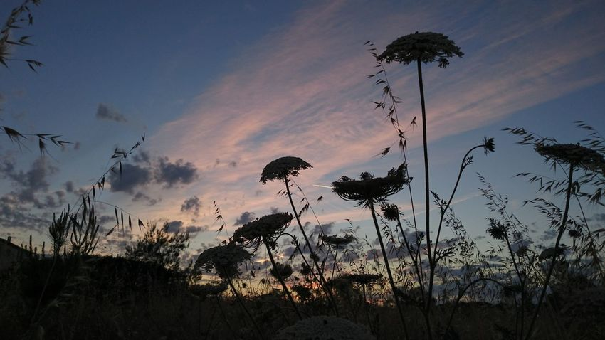 Beauty In Nature Nature No People Outdoors Plant Scenics Silhouette Sky Sunset Tranquility