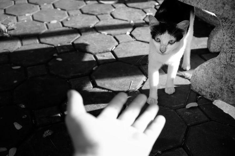 High angle portrait of cat hand on cobblestone
