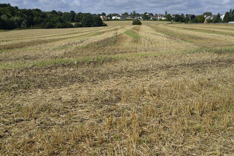 Empty field,