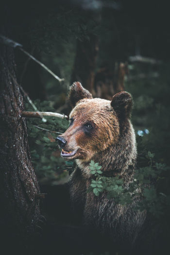 Close-up of bear by tree in forest