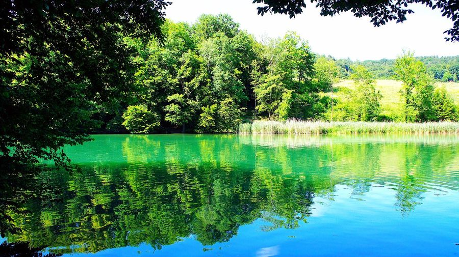 Tree Reflection Water Nature Green Color Tranquility Beauty In Nature Tranquil Scene Outdoors No People Idyllic