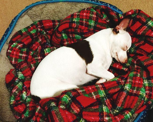 Lovemydog Sleeping Mydogissosweet Heartmelting 😍🐾🐶